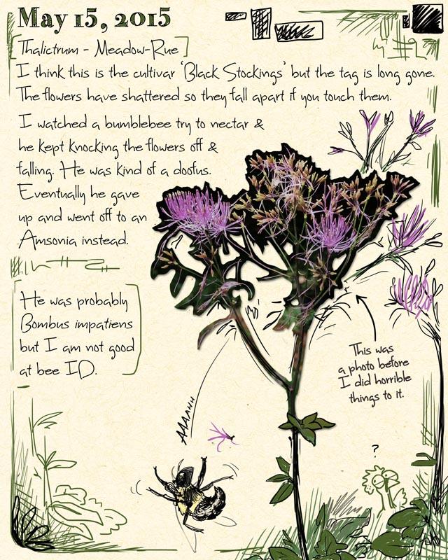 gardenjournal5-15-15