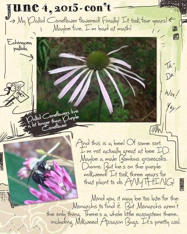 gardenjournal6-04-15B