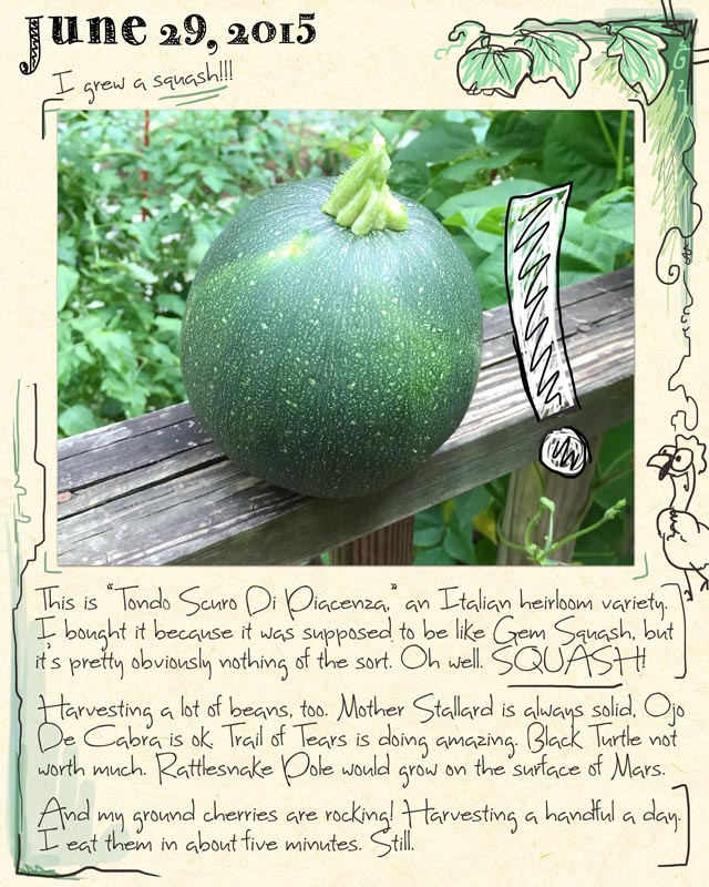 gardenjournal6-29-15