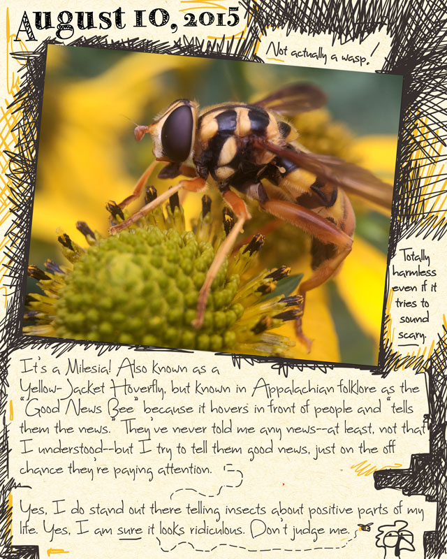gardenjournal8-10-15