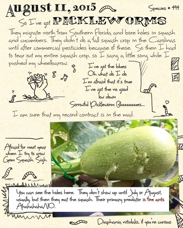 gardenjournal8-11-15