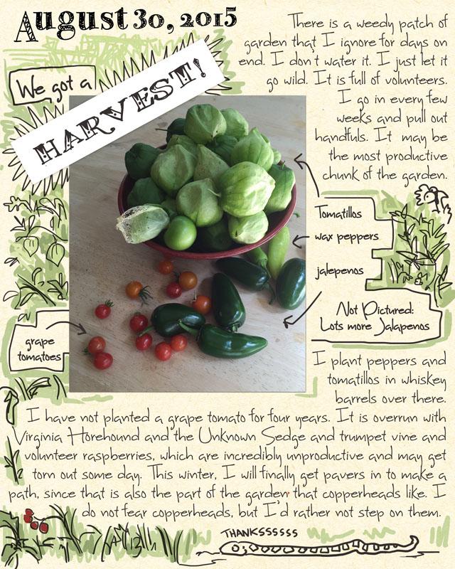 gardenjournal8-30-15
