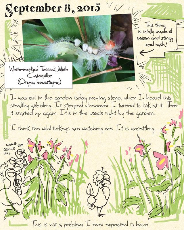gardenjournal9-08-15